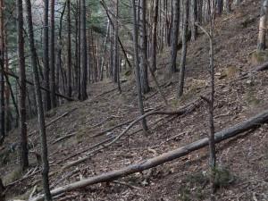 Vecchio alveo del Ru del Pan Perdu di Châtillon nel bosco – Foto di Gian Mario Navillod.