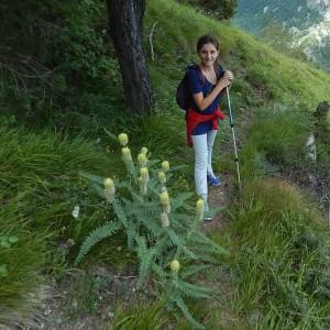 Astragalus alopecurus Pall. - Foto di Gian Mario Navillod.