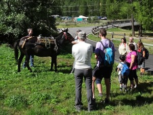 La mula Rebecca che accompagna i turisti nel sabato del villaggio di Valsavarenche - Foto di Gian Mario Navillod.