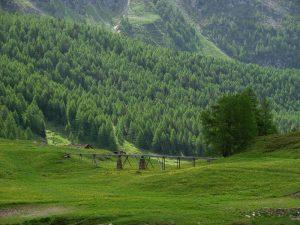 Il ru dell'Alpe Closeau nel 2010 - Foto di Gian Mario Navillod.