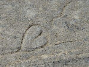 Hedera distingues - incisione romana a Châtillon - Foto di Gian Mario Navillod.