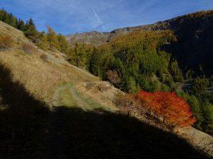 Il Ru des Barmes di Saint-Rhémy-en-Bosses in autunno - Foto di Gian Mario Navillod.