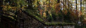 Non è un bosco, è un tetto di Chamois - Foto di Gian Mario Navillod.