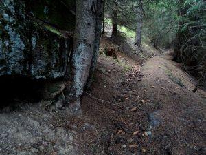 Tratto abbandonato del Ru d'Arc (in alveo naturale) - Foto di Gian Mario Navillod.