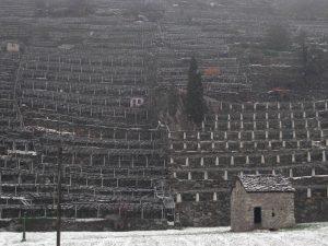 I muri di sostegno delle vigne di Donnas - gennaio 2014 - Foto di Gian Mario Navillod.