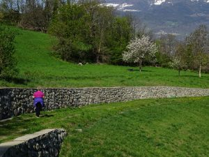 Pascoli fioriti lungo il Ru du Seigneur di Brissogne - Foto di Gian Mario Navillod.