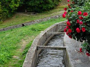 Dalie rosse sul Ru Neuf di Gignod - Foto di Gian Mario Navillod.