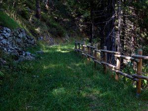 Pista forestale del Ru de Tchiou - Foto di Gian Mario Navillod.