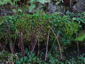 Tubazione del Ru Veuillen ricoperto dalla vegetazione nel tratto per escursionisti esperti - Foto di Gian Mario Navillod.