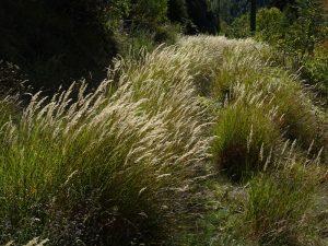 Pista di servizio del Ru Pompillard coperta da erbe ed arbusti - Foto di Gian Mario Navillod.