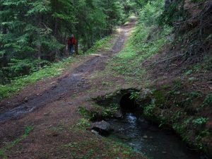 Sentiero per Les Ors all'incrocio con il Ru Entre La Salle - Foto di Gian Mario Navillod.