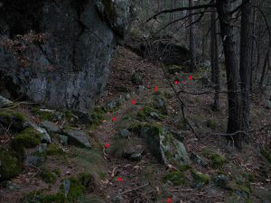 Tratto del Ru du Pan Perdu nel bosco - foto di Gian Mario Navillod.
